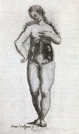 Woman's abdomen, 17th century artwork